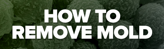 How to Remove Mold Mitigation1